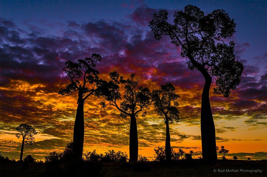 Fiery sunset over bottletree hill